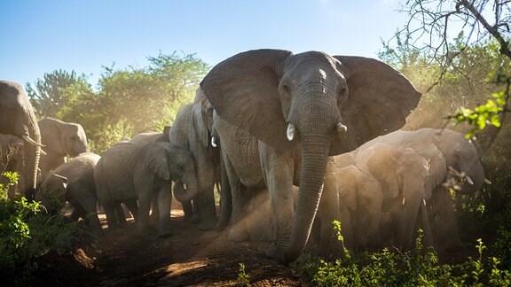 Elefanten sind die Architekten der südafrikanischen Buschsavanne.