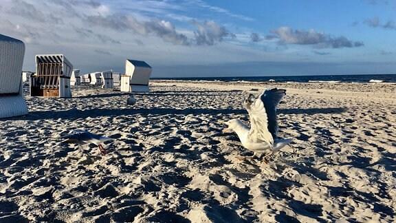 Möwe am Strand von Hiddensee