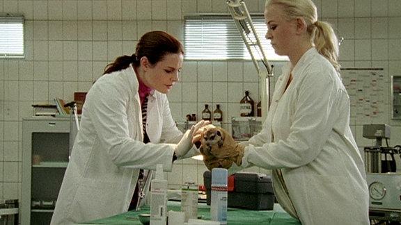 Tierärztin Dr. Mertens behandelt ein verletztes Erdmännchen