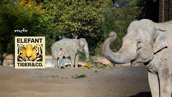 Elefant, Tiger & Co.-Logo - und zwei Elefanten und ein Tierpfleger im Leipziger Zoo