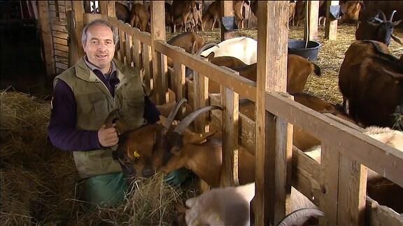 Landwirt mit Ziegen im Stall