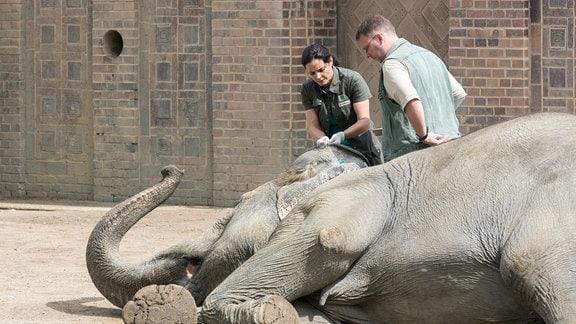 Die Elefantendame Tura ist plötzlich zusammengebrochen. Tierärztin Dr. Mertens (Elisabeth Lanz) verabreicht ein stabilisierendes Kreislaufmittel.