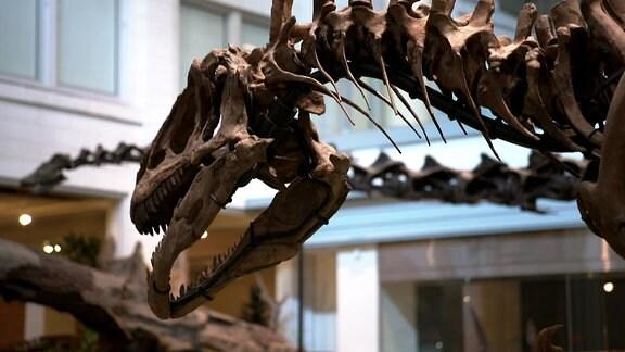 """Der """"Tyrannosaurus"""" von Tambach-Dietharz (nur in D)"""