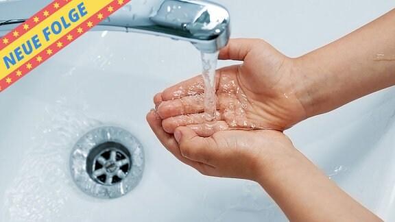 Figarino - Hygiene (Neue Folge)