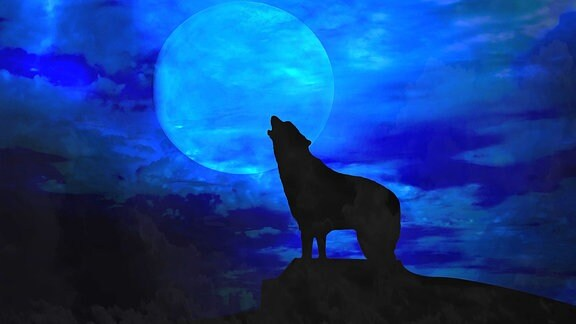 Ein Wolf heult den Mond an
