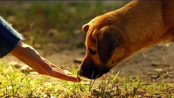 Ein Hund schnüffelt an einer Hand.