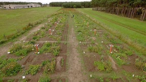 Blick auf ein in mehrere Beet-Parzellen unterteiltes Feld.