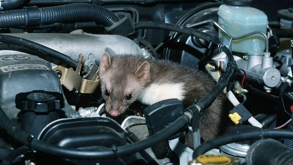 Das hilft gegen Marderbisse im Auto! | Das Erste