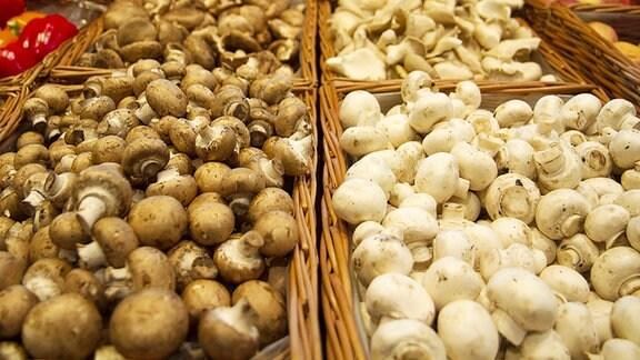 Pilze in einem Supermarkt.