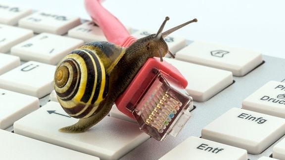 Schnecke auf einem Netzwerk-Kabel