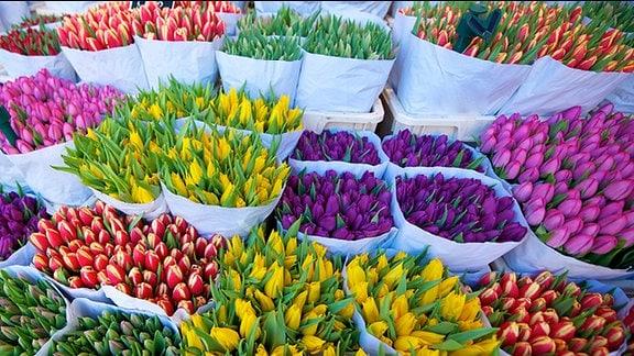 Für den Verkauf abgepackte Tulpen.