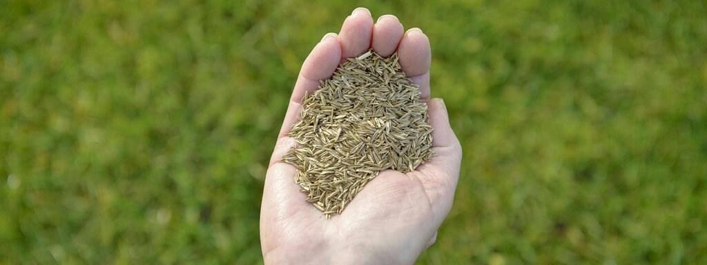 So Bekommt Man Einen Schönen Rasen Mdrde