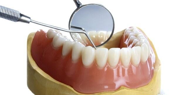 Untersuchung an Zahnmodell
