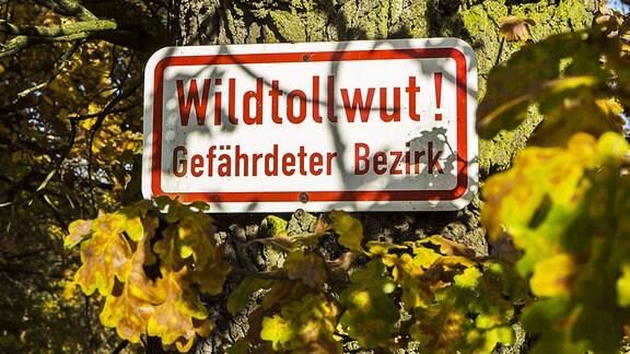 Schild Wildtollwut Gefährdeter Bezirk