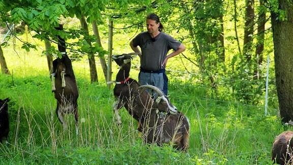 Der Hirte mit seinen herumspringenden Ziegen