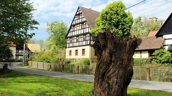 Ein abgesägter Baum vor einem Fachwerkhaus