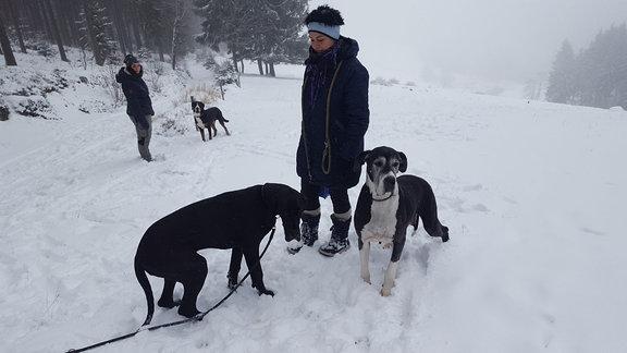 Wenn Schnee liegt, gehen die Doggen von Züchterin Angela Böhm besonders gern auf Gassi.