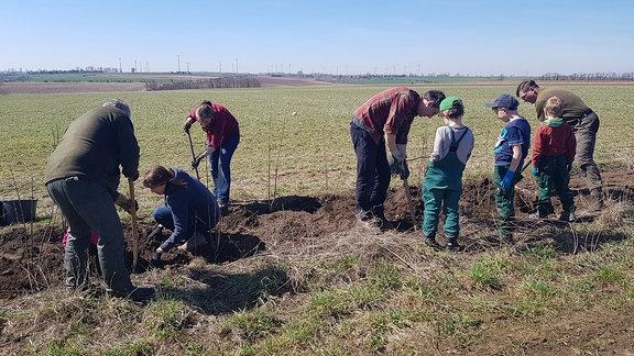 Mehrere Erwachsene und einige Kinder pflanzen eine Hecke an einem Feldrand.