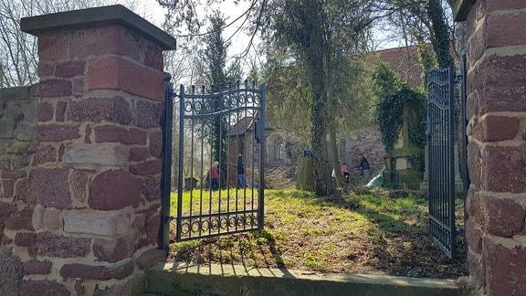 Menschen machen Frühjahrsputz in einem Kirchgarten. Sie entfernen verwachsenen Efeu.