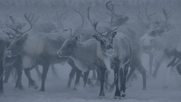 """Szene aus der MDR/ARTE-Koproduktion """"Rentiere auf dünnem Eis"""""""