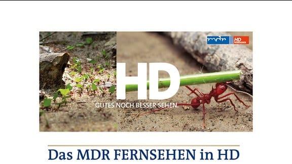 """Coverfoto des Flyers:  """"Das MDR FERNSEHEN in HD"""""""
