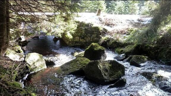 Nationalpark Harz: die Holtemme
