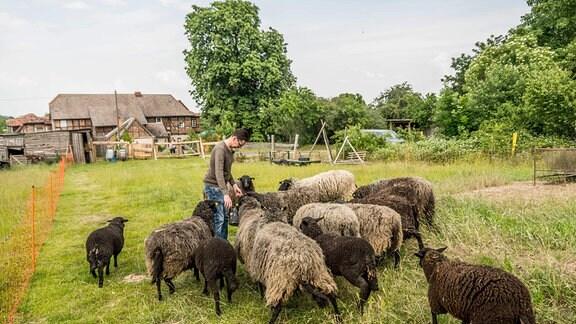 Mann steht zwischen Schafen auf einer Wiese.