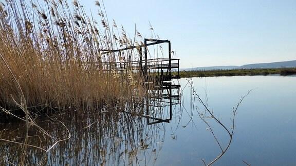 Eine Uferlandschaft.