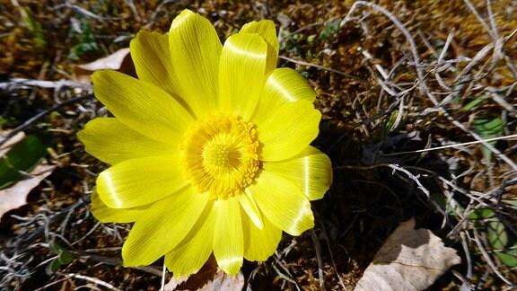 Eine gelbe Blüte.