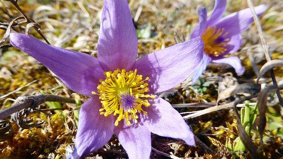 Eine lila Blüte.