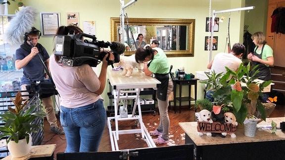 Team aus Volos und Azubis dreht wie Salonbesitzerin Kerstin Matkowitz ihren Hund Honey frisiert.