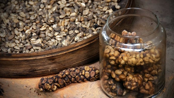 Kopi Luwak Kaffee (halb verdauten Kaffeebohnen)