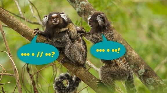 Zwei kleine Affen mit weißen Haarbüscheln am Kopf sitzen auf einem Ast. Zwei Sprechblasen mit Zeichen darin symbolisieren von den Affen angewandre Grammatik. Rinsherum und im Hintergrund viel unscharfes Grün.