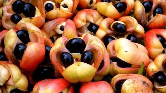 Akee, Ackee, Aki oder Akipflaume (Blighia sapida), geerntete Früchte mit Samen