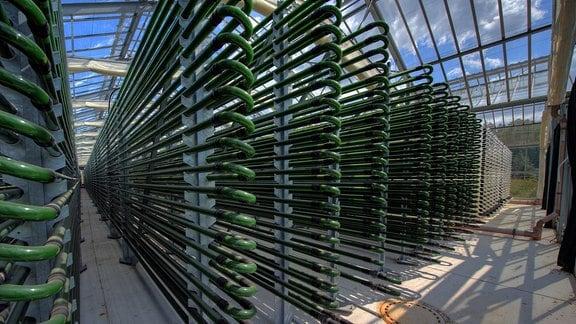 Viele lange, von gebogene Glasröhren mit grüner Füllung in einer Art Gewächshäuser. Blick von schräg vorn, perspektivisch nach hinten.