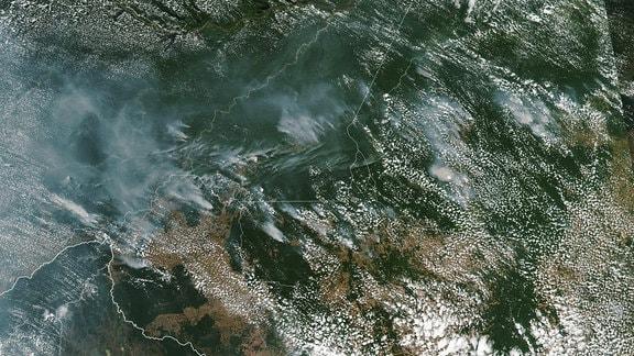 Satellitenbild der Amazonas-Region im Grenzgebiet zwischen Brasilien, Bolivien und Paraguay. Darauf sind deutlich großflächige Rauchwolken mehrerer Brände zu sehen.