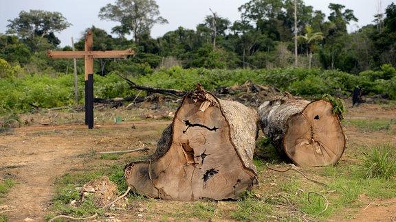 Illegal abgeholzte Bäume