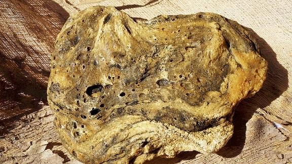 Ambra vom Pottwal gefunden in Französisch Polynesien