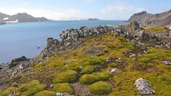 Grün-felsiges Gebiet auf der König-Georg-Insel