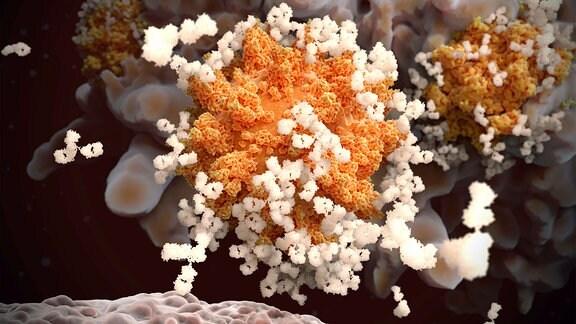 Illustration - Antikörper Sars-CoV-2