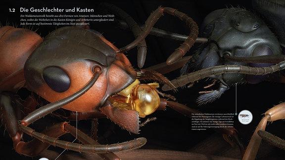 Ameisenkollektiv Seiten 8 und 9
