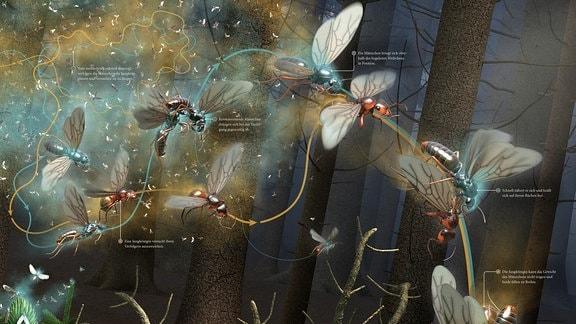 Ameisenkollektiv Seite 26
