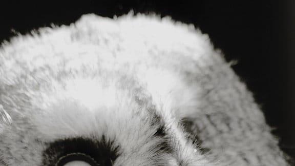 Fast die gesamte Seite wird von einem (zum Hintergrund hin unschaften) Kopf eines mit flauschigen Federn ausgestatteten Vogels eingenommen, diagonal leicht nach links geneigt. Ein sehr waches Auge blickt leicht von oben auf den Betrachter; der kleine spitze Schnabel verschwindet fast im Federkleid.