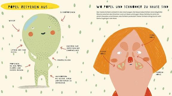"""Die linke Seite zeigt ein merkwürdiges hellgrünes Wesen mit großem Kopf und kleinem Rumpf, das die Popel darstellen soll. Um dieses Wesen herum sind die """"Zutaten"""" eines Popels zu lesen (wie Lipide oder Proteine). Auf der rechten Seite ist ein Kopf mit rotblonden Haaren zu sehen, auf dem man die Lage von Stirn- Siebbein- und Kiefernhöhle erkennen kann."""
