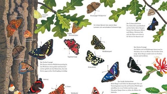 Seitenansicht aus dem Buch: Eine Vielzahl von Schmetterlingen wird in der Nähe eine Eichenstamms gezeigt und jeweils mit dem Namen der Art versehen.