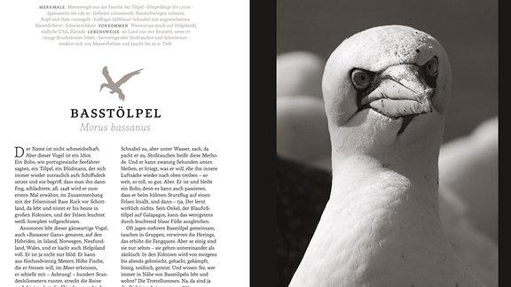 Auf der rechten Bildseite: Kopf und langer Hals eines schneeweißen Vogels mit glattem Federkleid, einem spitzen Schnabel und eng beieinander liegenden, nach vorn gerichteten Augen. Blickt aus Betrachterperspektive rechts aus dem Bild hinaus. Links Text.