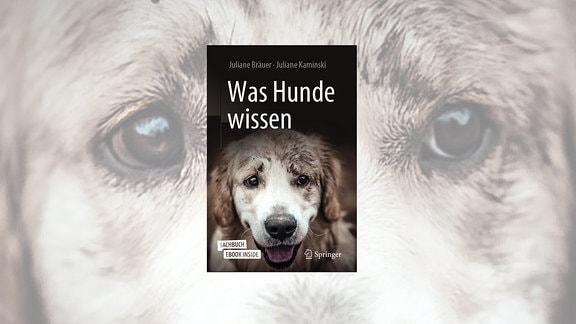 Was Hunde wissen