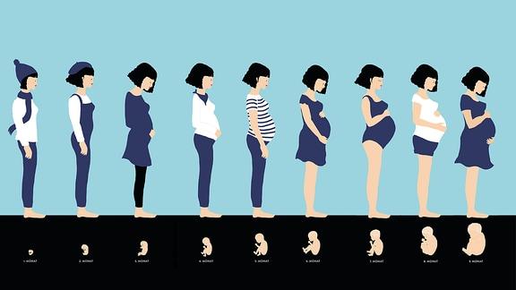 Das Bild zeigt eine dunkelhaarige Frau in Seitenansicht neunmal, je ein Bild pro Schwangerschaftsmonat. Unter der Frau jeweils die Größe und das Aussehen des wachsenden Babys.