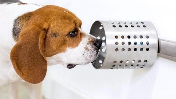 Ein Hund schnüffelt an einer Röhre mit einem Geruchspräparat.