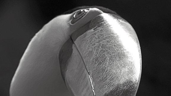 Ein großer Teil des Bildes wird von einem riesigen Schnabel eingenommen, der aus dem Bild heraus fast direkt auf den Betrachter gerichtet ist. Durch den leicht geneigten Kopf des neugierig blickenden Vogels wirkt die Schnabelöffnung  in Verbindung mit den knopfförmigen kleinen Augen des Vogels wie ein Lächeln.